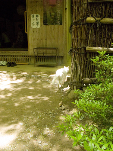 kyoto2011-02.jpg